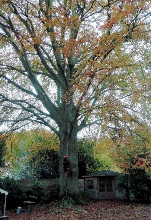 bomen snoeien in Laag-Keppel