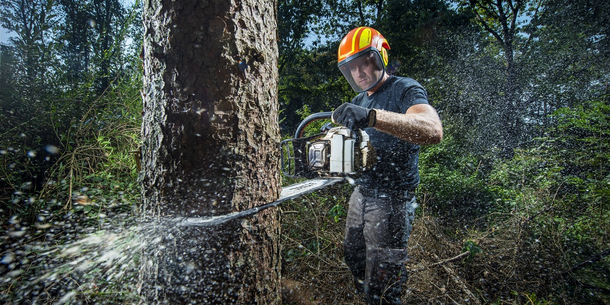 Bomen kappen door boomspecialist (BB)bomen. Arnhem, Apeldoorn, Nijmegen en Wageningen.