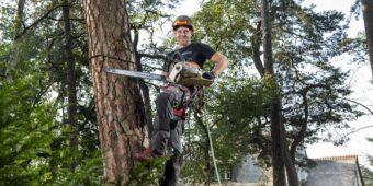 Bomen kappen door boomspecialist (BB)bomen.