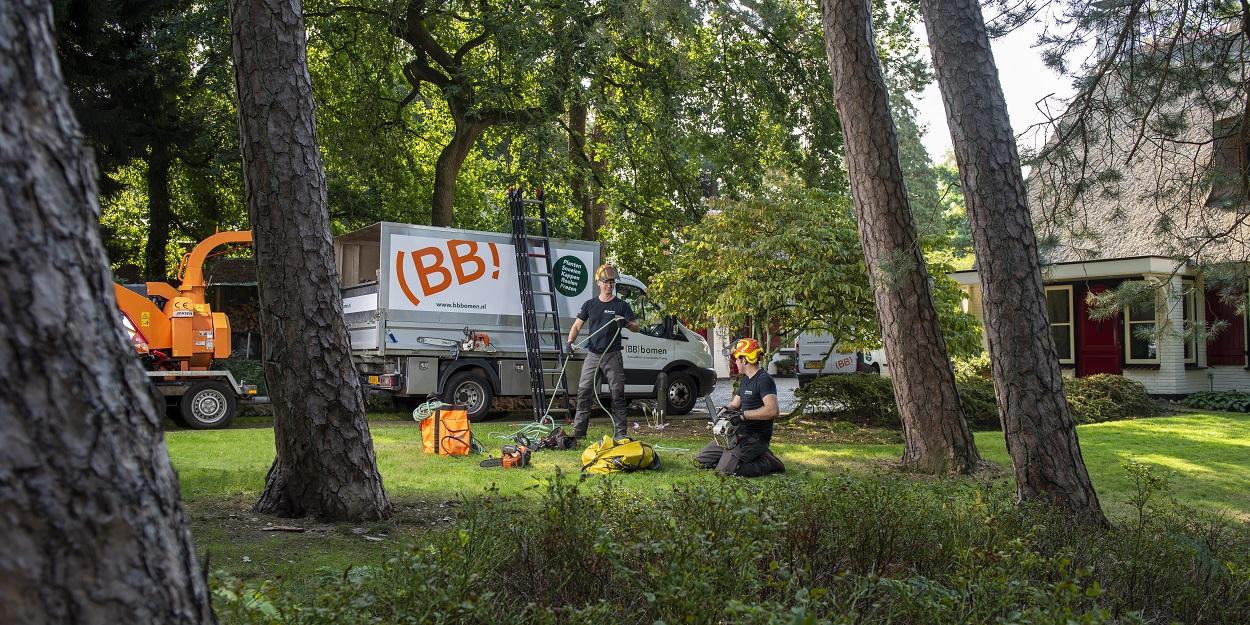 Boomverzorger (BB)bomen voor het kappen, snoeien en verplanten van bomen.