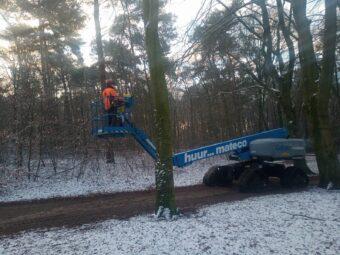 bomeninspectie Nijmegen door BB Bomen