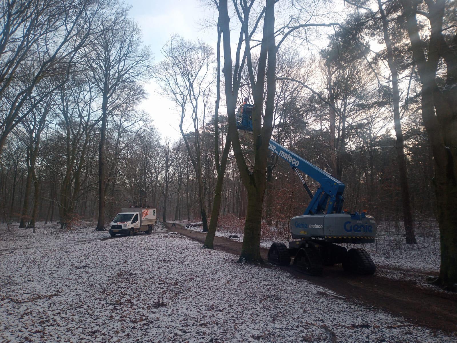 boomonderhoud Nijmegen door BB Bomen