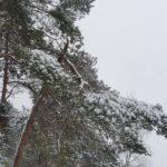 Bomenspecialist voor boomschade door sneeuw