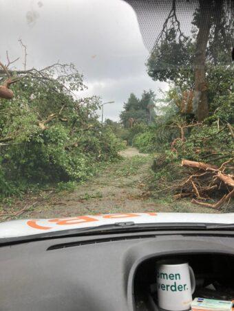 Omgewaaide boom opruimen
