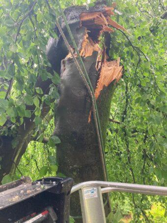 monumentale boom met afgescheurde tak
