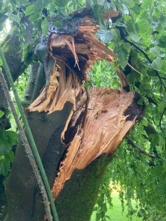 afgescheurde tak door storm