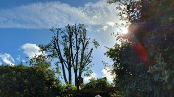 snoeien in onbereikbare achtertuin