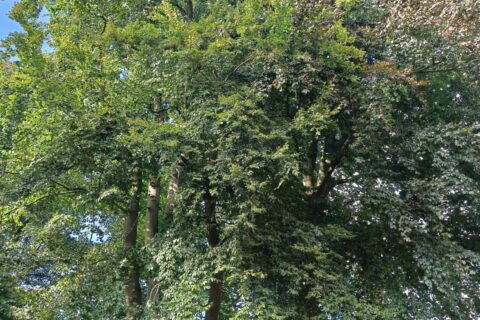 Wanneer is een boom ziek?