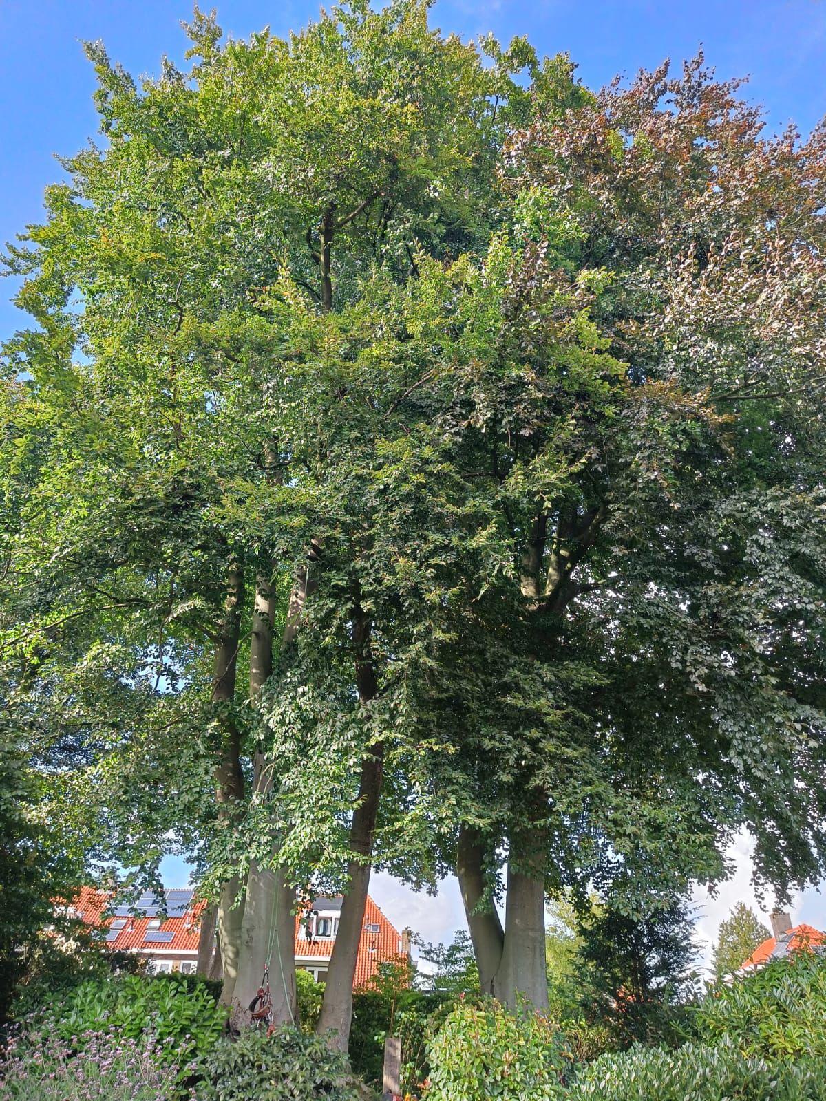Is mijn boom ziek?